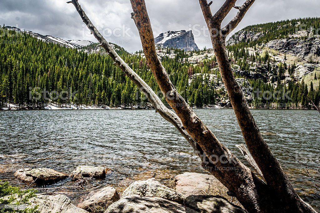 Tree Trunks Frame Hallett Peak stock photo