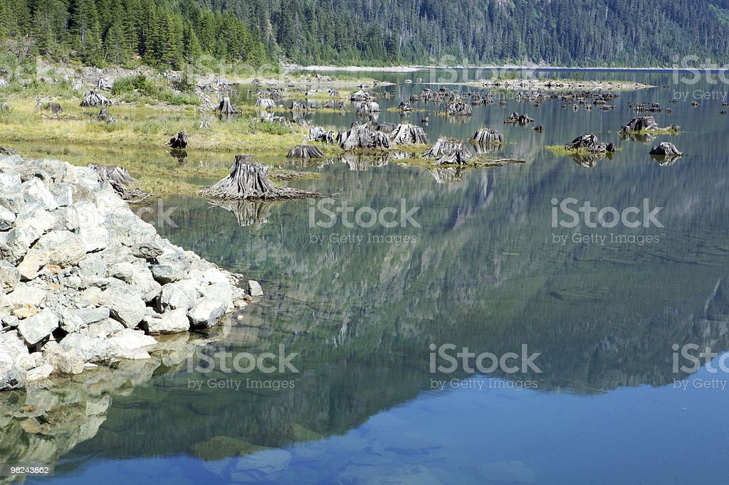 Tree Trunks in a Lake royalty-free stock photo
