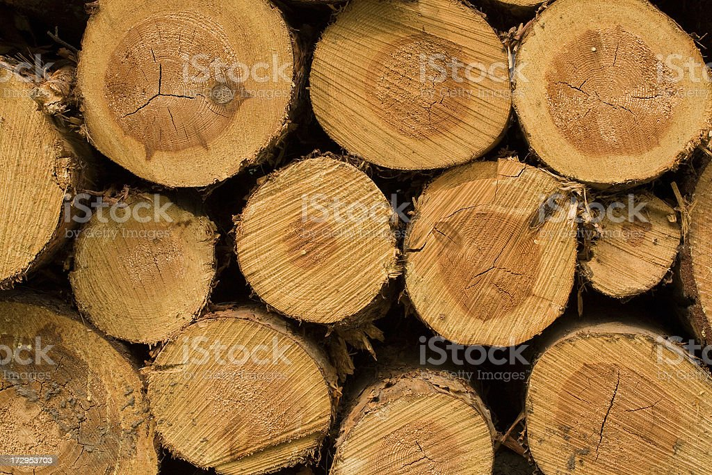 Tree trunks royalty-free stock photo