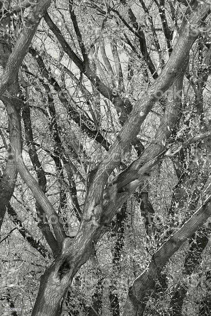 Tree Trunks royalty-free stock photo