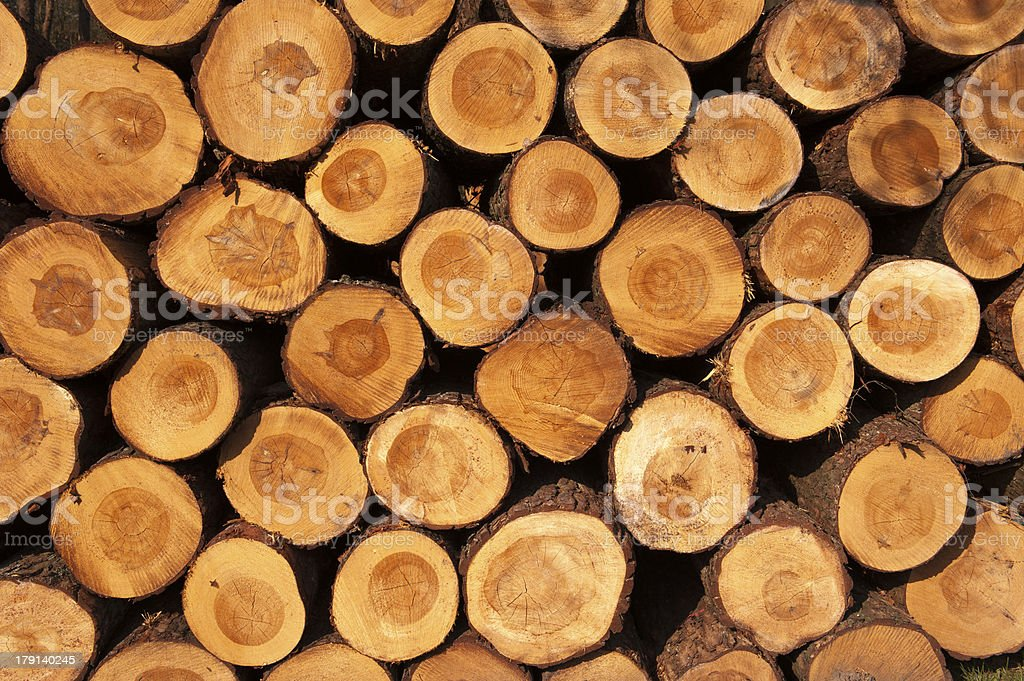 Tree trunks piled up in a stack stock photo