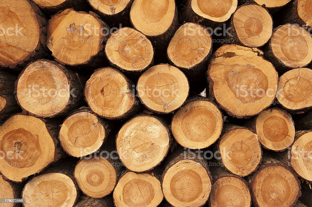 Tree trunks stacked up in pile stock photo