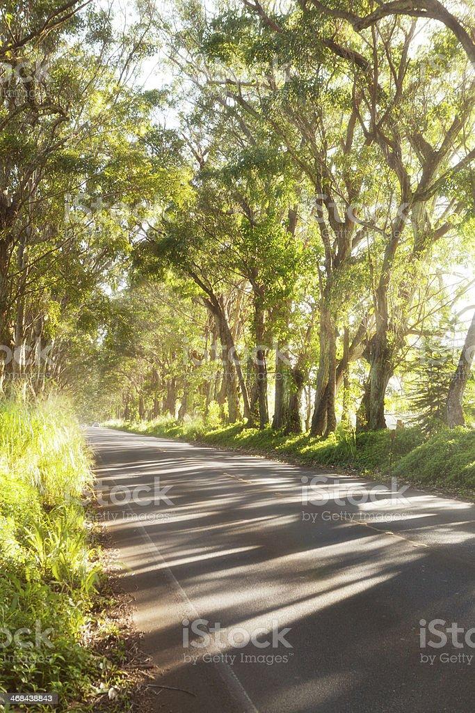 Tree Tunnel in Koloa, Kauai, Hawaii, USA stock photo