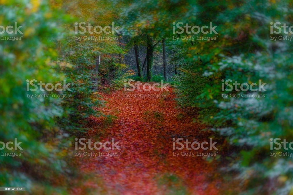 Träd tunnel bildbanksfoto