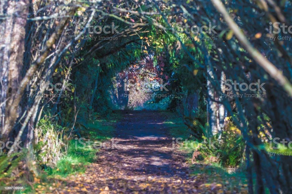 Tree Tunnel stock photo
