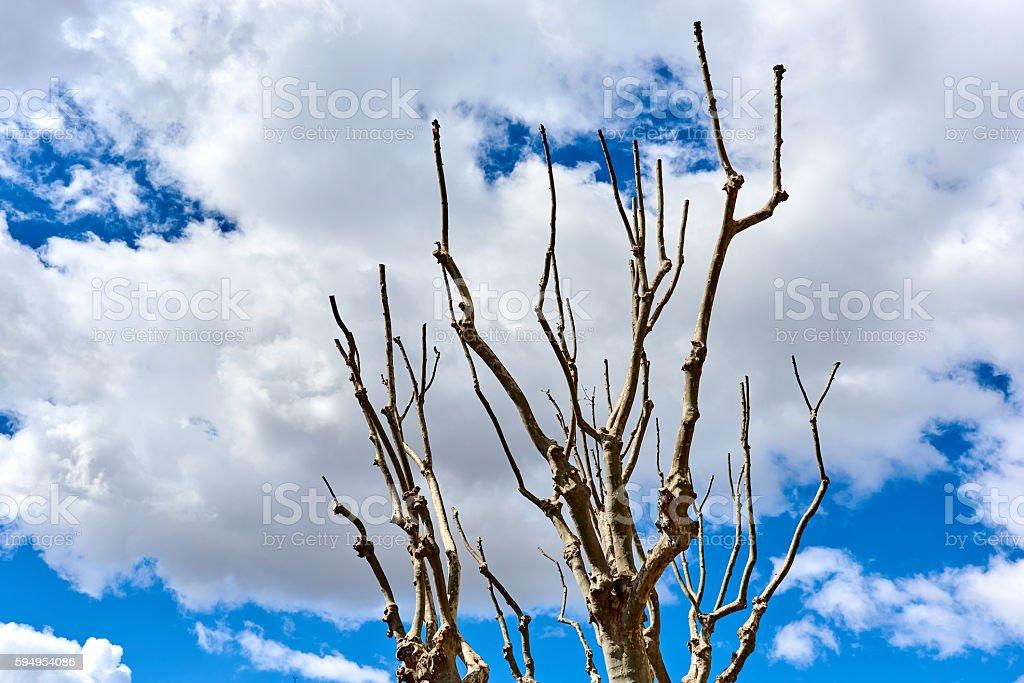 Tree twigs stock photo