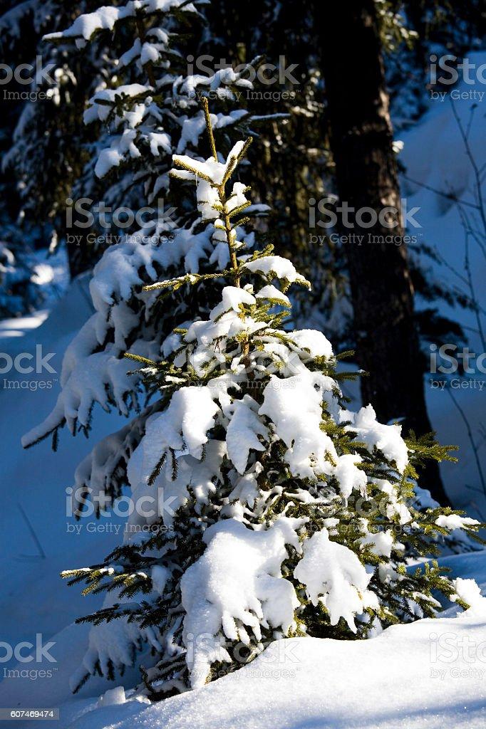 tree under snow stock photo