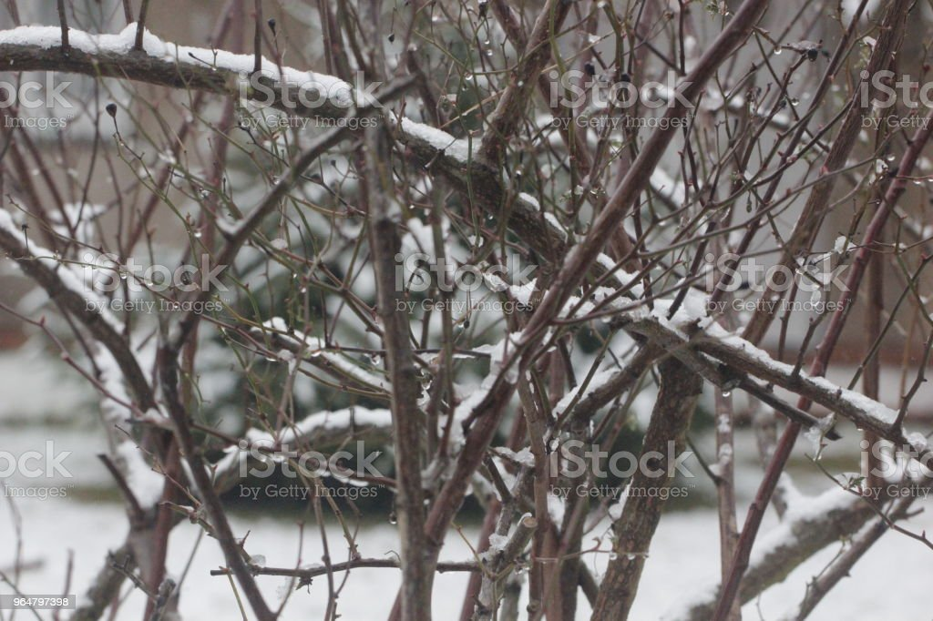 albero sotto la neve royalty-free stock photo