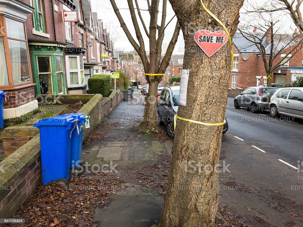 Tree under threat of felling in residential area of Sheffield. stock photo