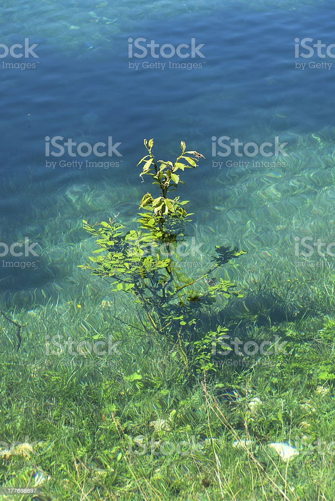 tree underwater royalty-free stock photo