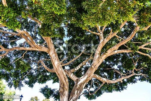 175407085istockphoto Tree Veins 511470800
