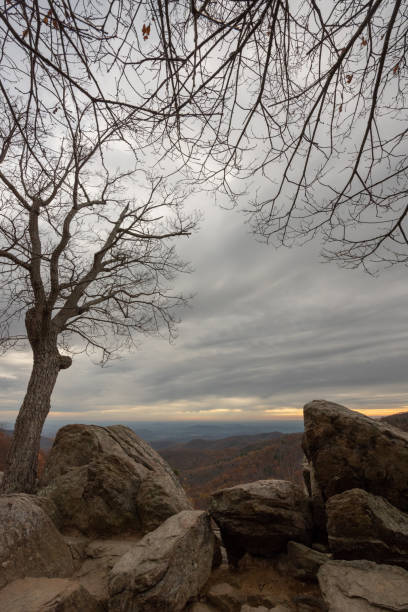 Tree View stock photo