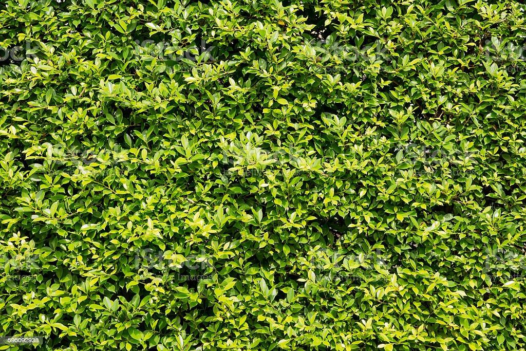 Tree wall leaves background. Lizenzfreies stock-foto