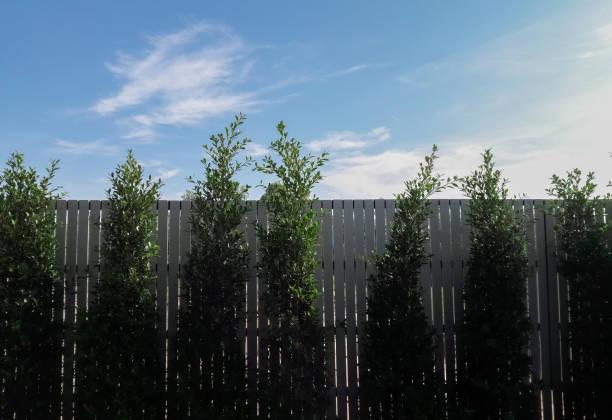Tree wall with beautiful blue sky stock photo