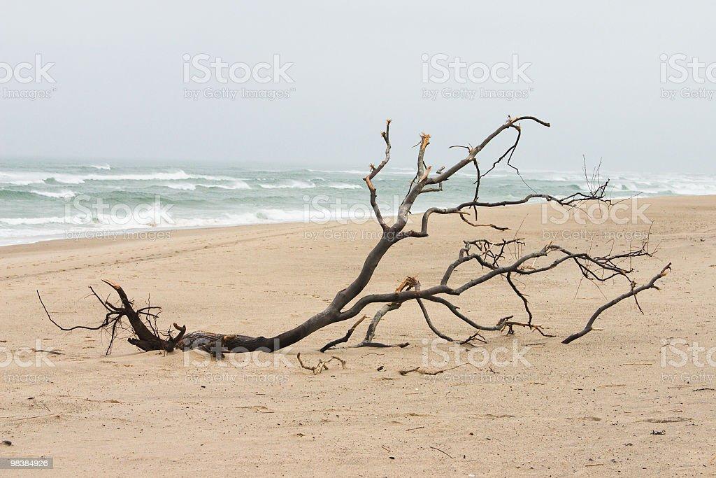 나무 워시드 해변의 바라요 royalty-free 스톡 사진