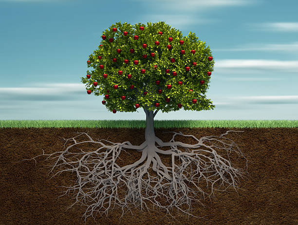 tree with apple - tree roots stock pictures, royalty-free photos & images