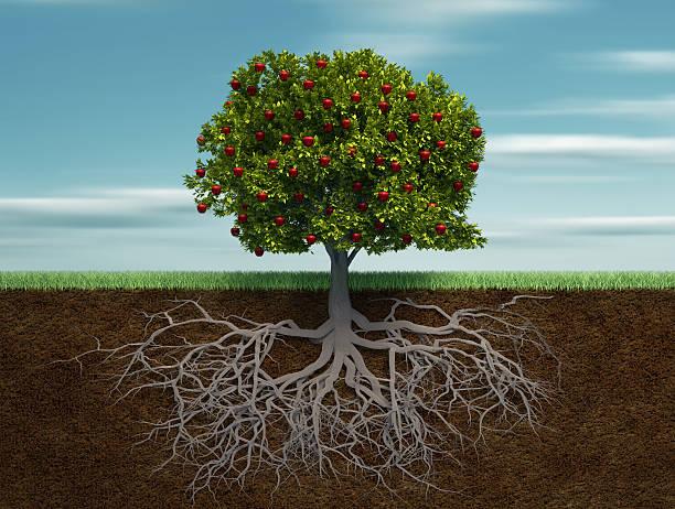 """Vaizdo rezultatas pagal užklausą """"tree with roots"""""""