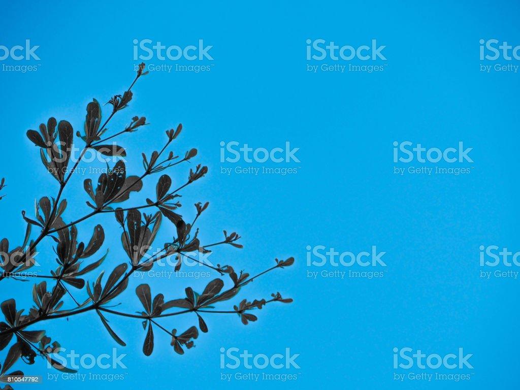 Tree with blue background isolated stock photo more pictures of tree with blue background isolated royalty free stock photo izmirmasajfo