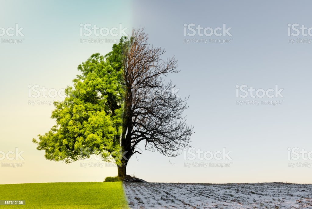 Tree with climate or season change stock photo