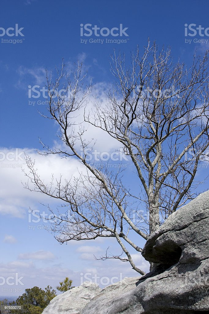 Tree with Clouds and Blue Sky royalty-free stock photo