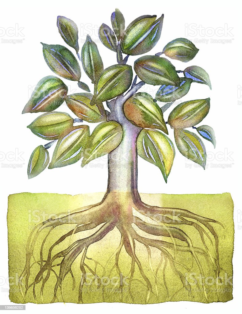 Tree with deep roots_2 stock photo