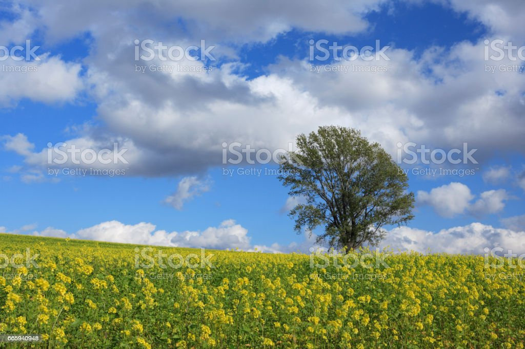 A tree with flowers foto stock royalty-free