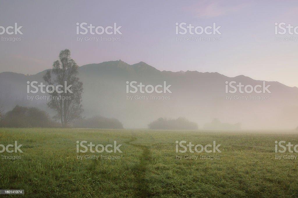 Tree with fog royalty-free stock photo
