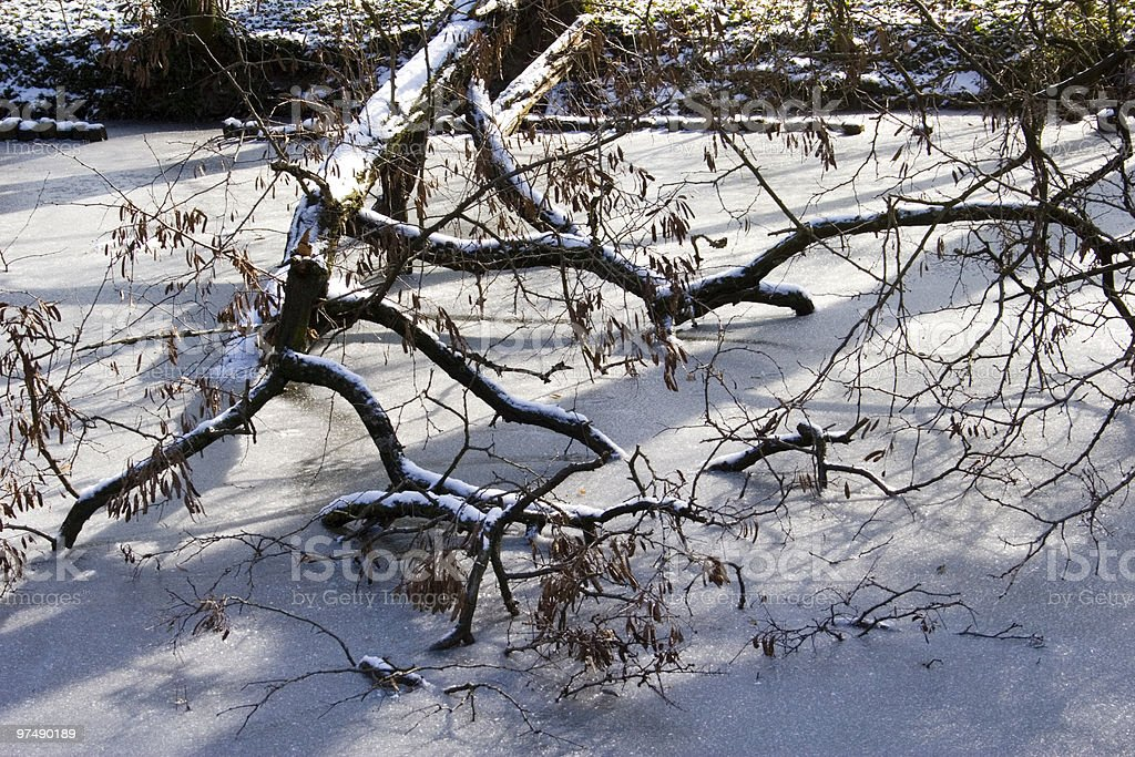 Tree with frozen lake royalty-free stock photo