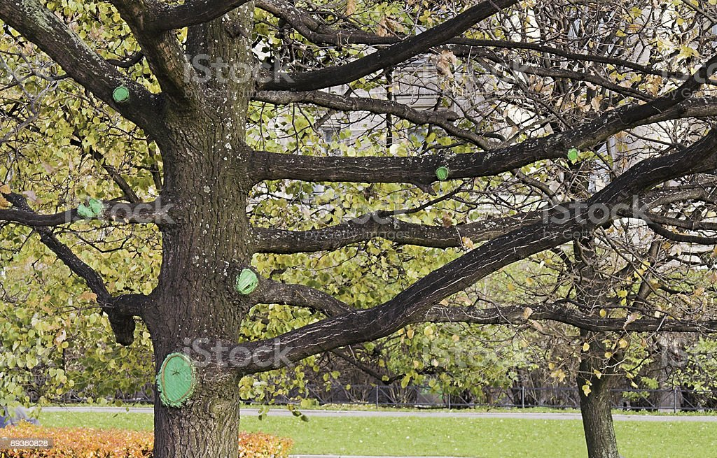 Tree with gree bark patches royalty free stockfoto