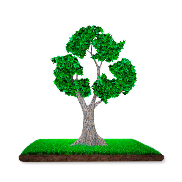 Tree with leaves in recycling symbol, grass land, 3D illustration. stock photo