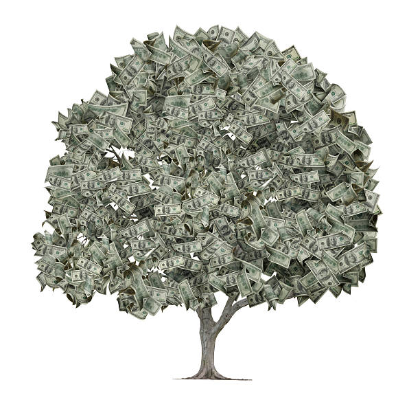 Tree with Leaves Made Out of Hundred Dollar Bills  money tree stock pictures, royalty-free photos & images