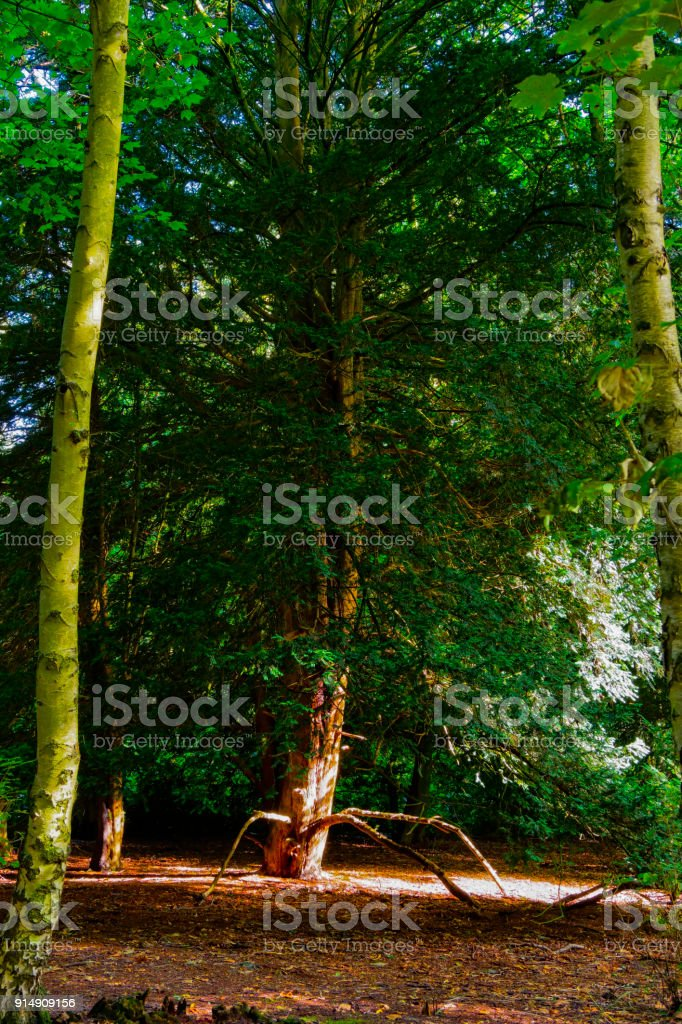 A tree with legs stock photo