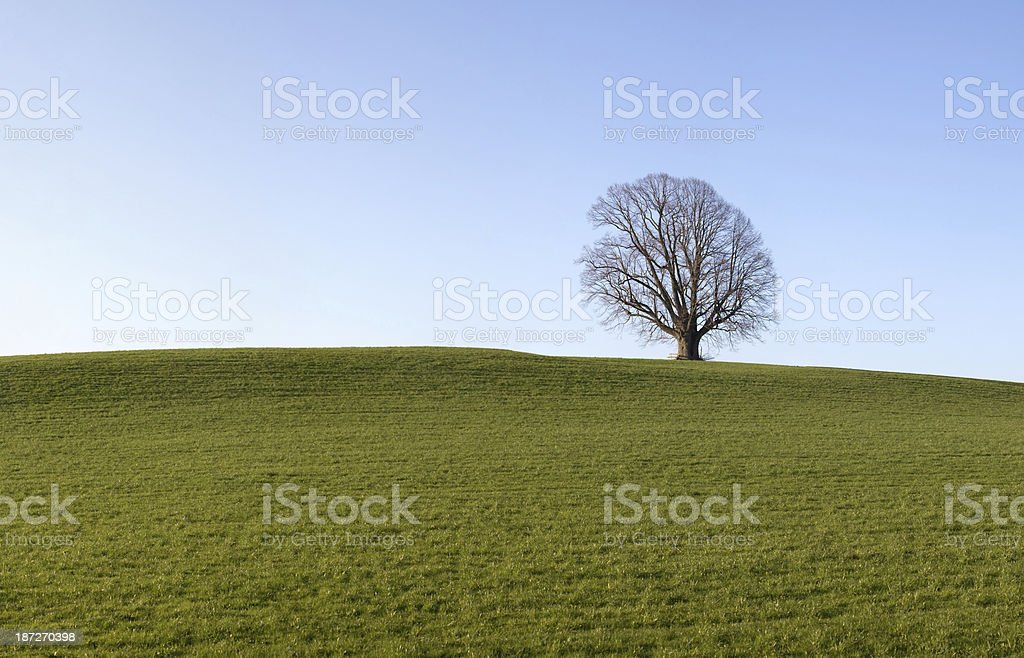 tree with meadow and sky royalty-free stock photo
