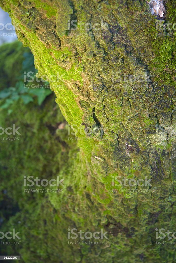 Tree with Moss royalty-free stock photo