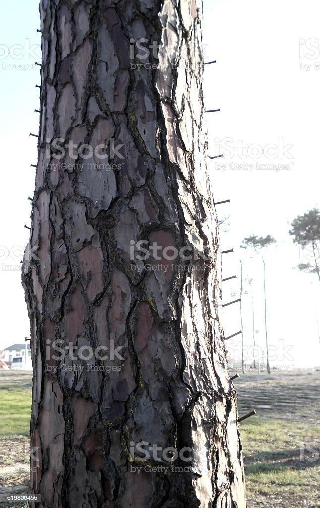 Tree With Nails Sticked stok fotoğrafı