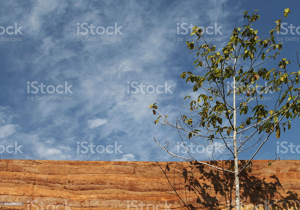 Tree With Rammed Earth Wall Material Texture Stock Photo - Download