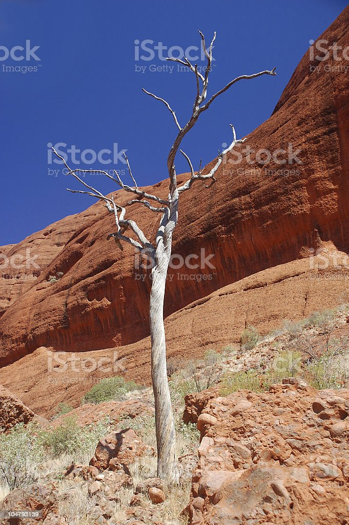 Tree with red rocks in Australia stock photo
