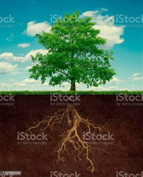 Tree with root picture id1137282220?b=1&k=6&m=1137282220&s=612x612&h=1n02d9dgvf 0yrqsro7tlumpygvh9xziioheiidmokc=