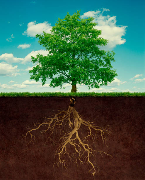 Tree with root picture id1137282220?b=1&k=6&m=1137282220&s=612x612&w=0&h=k6gvbj8m2d0hqk9ssy85wrvfkogqetxkkqnbbyg7wek=