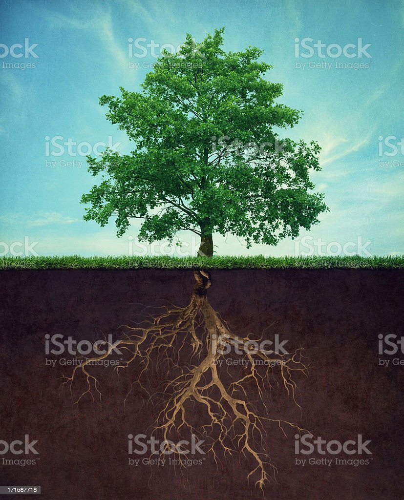 tree with root - Royalty-free Achtergrond - Thema Stockfoto