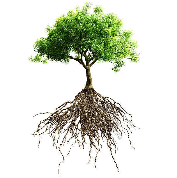 tree with roots - tree roots stock pictures, royalty-free photos & images