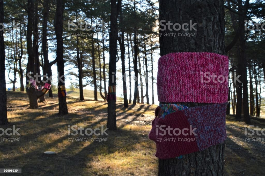 Tree with scarf in forest stock photo