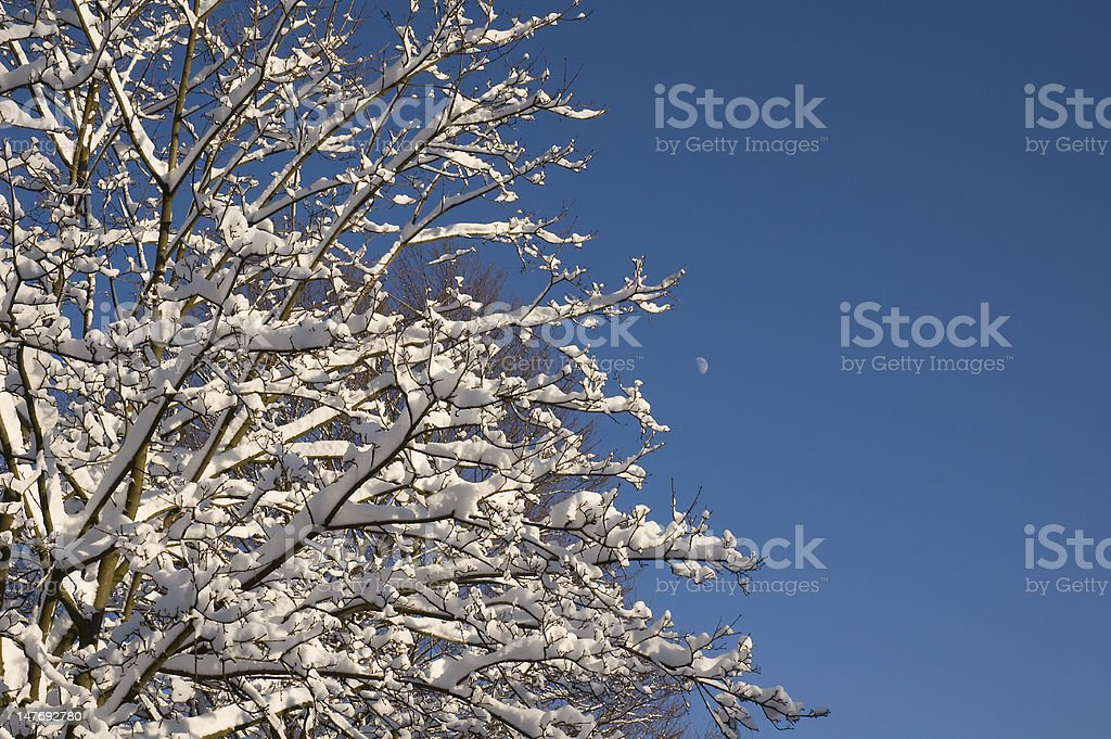 Tree with snow in front of a blue sky stock photo