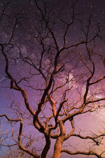 Tree with starry sky stock photo