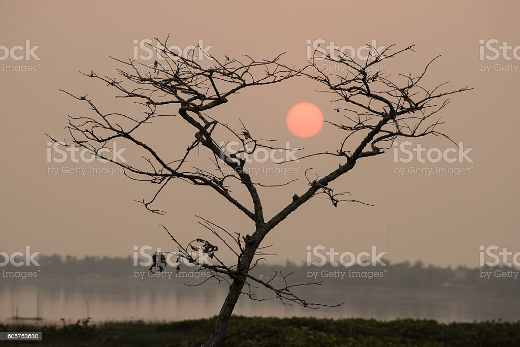 Tree with sunset stock photo