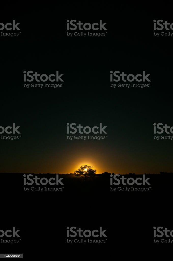 árbol con el sol detrás en la oscuridad - foto de stock