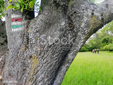 Tree with tourist sign and group of backpackers - tourist walking in the distance in natural park on the footpath around bloomed meadow in Carpathian Mountain