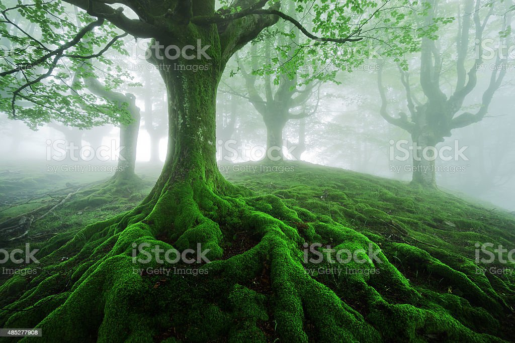 tree with twisted roots - Royalty-free 2015 Stock Photo