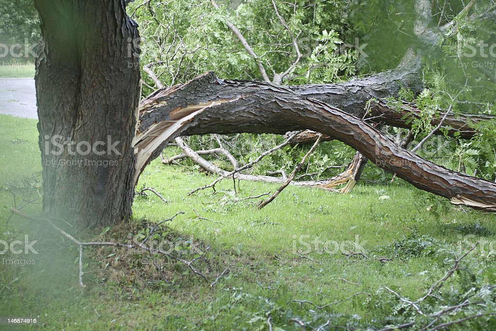 Tree with wind damage royalty-free stock photo