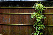 istock Tree with wooden fence wall, japanese style 627887694